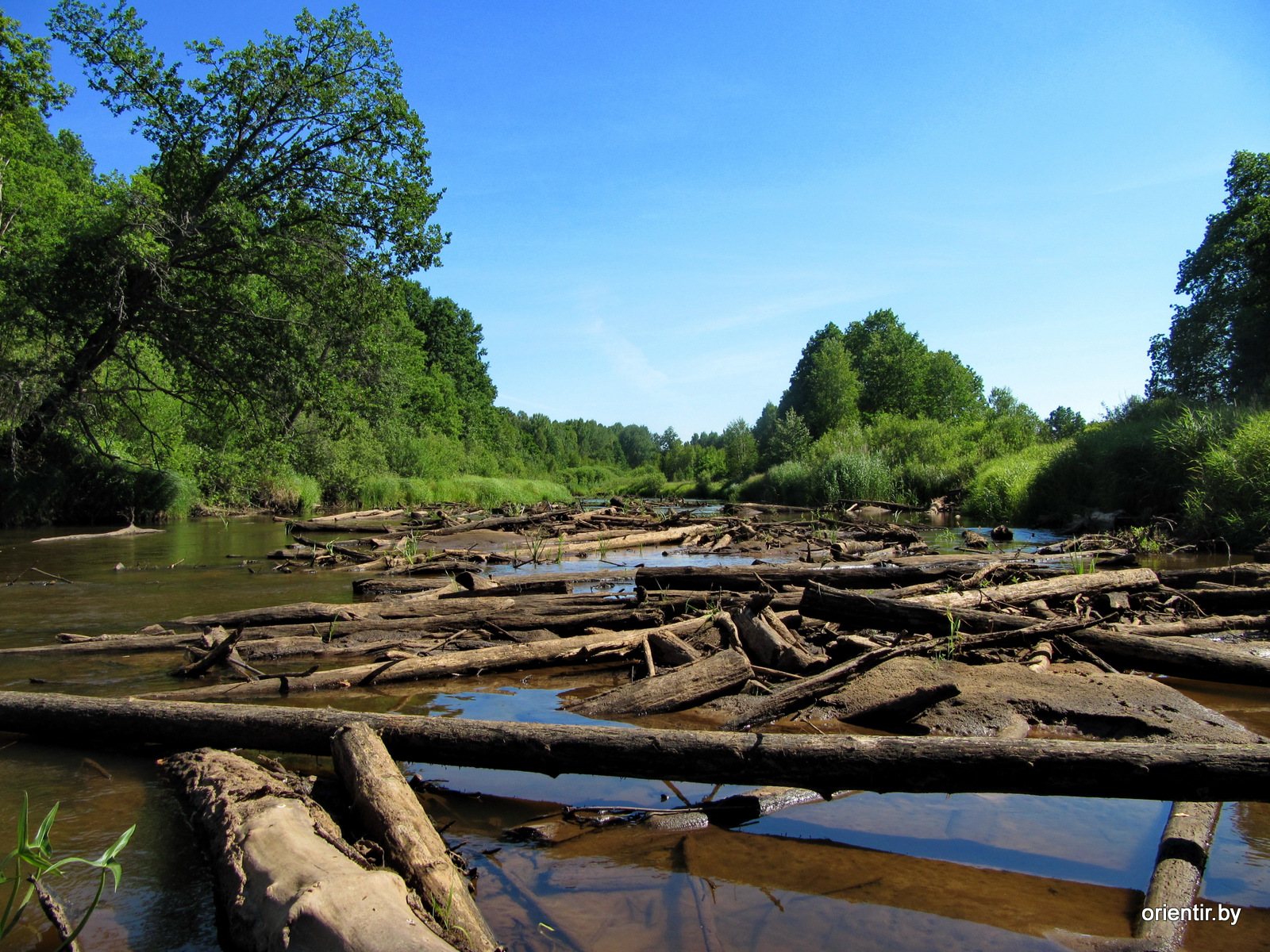 Когда-то по Уборти сплавляли лес, это похоже тот, который не захотел сплавляться