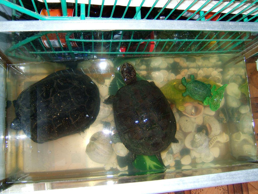 Черепахи в аквариуме