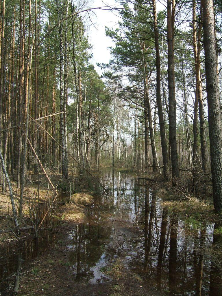 укатанными лесными дорожками