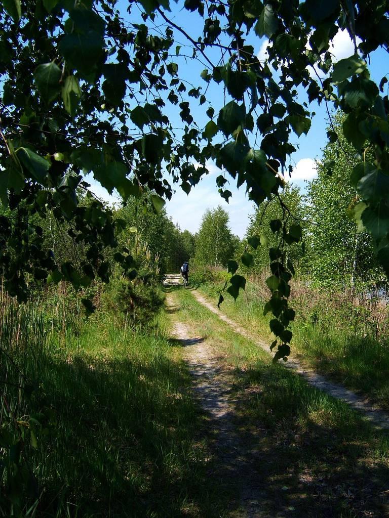 Дорога к Зелёному моху