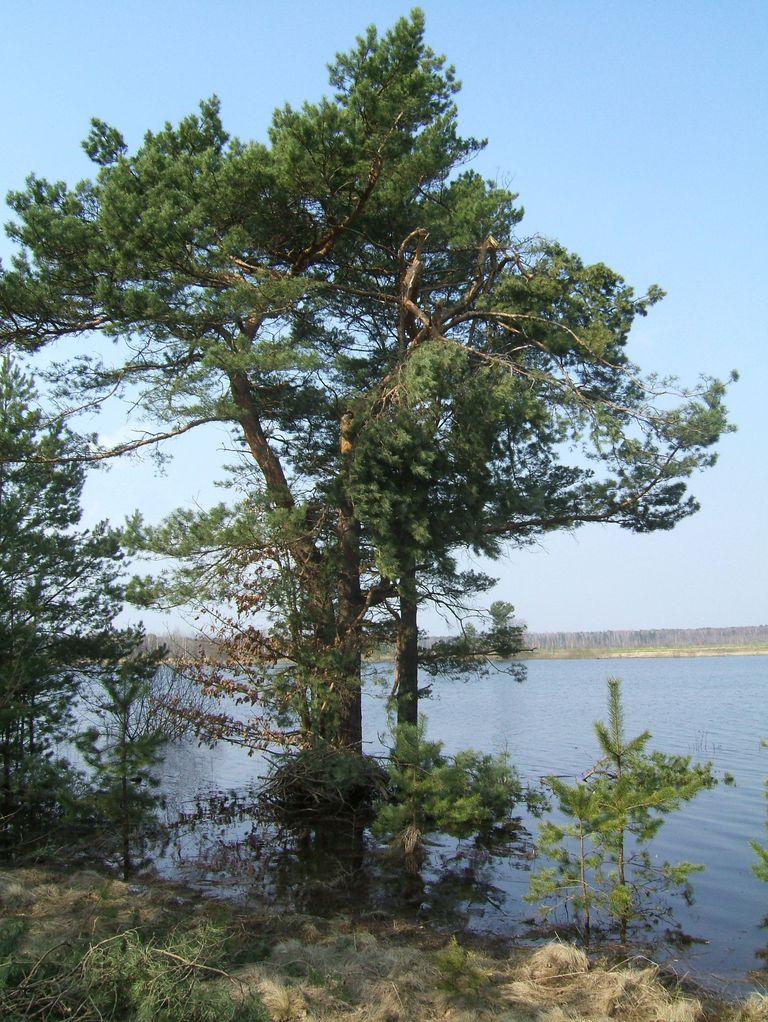 Озеро Глинницкое